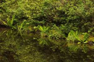 Regenwald-1