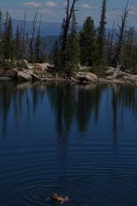 3-Gemsee-schwimmen